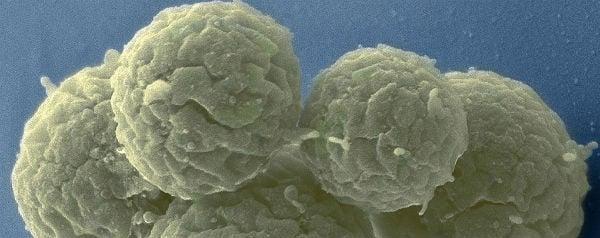 Bacterie JCVI-Syn3.0